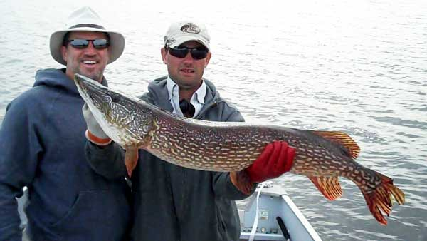 Northern_Pike_TROPHY_43_inch_Gods_Lake