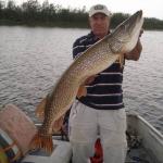 Massive Pike Caught on Gods Lake